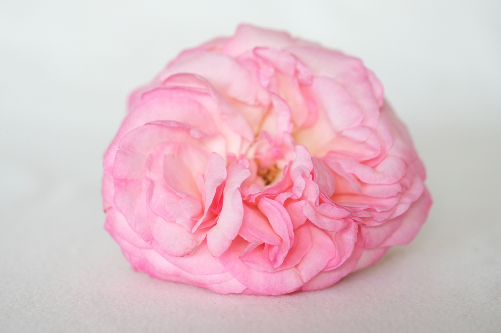Rose-Erfahrungsbericht-Yoni-Spa-Köln-Ricarda